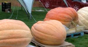 Pumpkins at Southampton festival